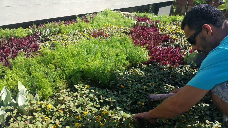 Telhado Verde agora é lei em Blumenau SC