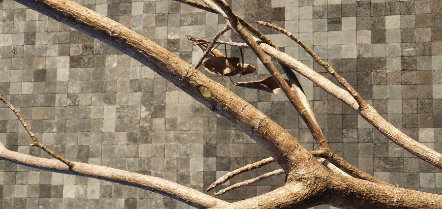 Você sabe identificar se uma árvore está morta?