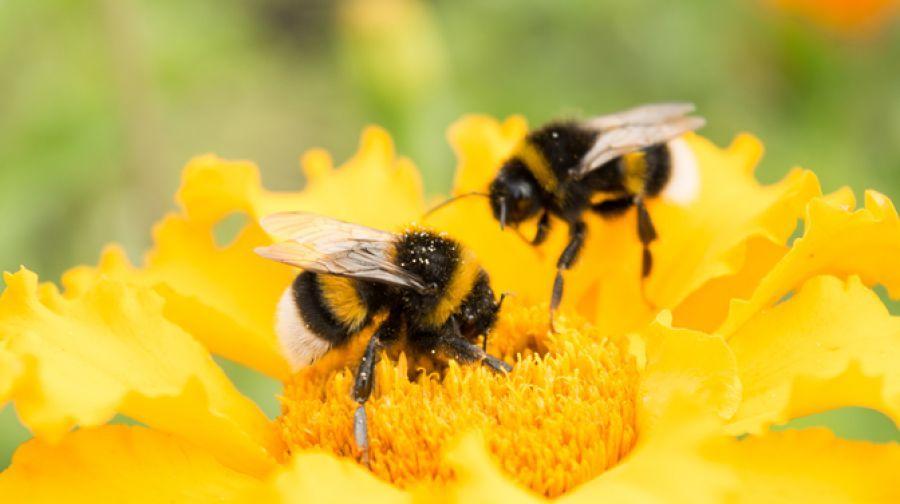 Abelhas: um grande potencial e seu futuro nos jardins