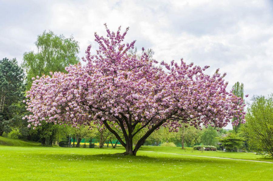 As raizes expostas de árvores são uma coisa ruim? Vamos a raiz do problema!