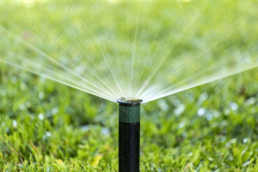 A importância da água para o seu jardim!