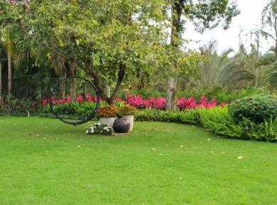 Preparando seu jardim para o verão: 4 dicas para se preparar para dias longos e calor pela frente