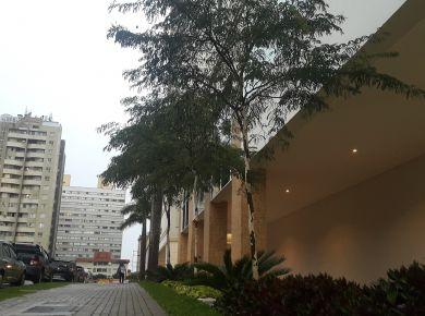 Árvore Pau Ferro no paisagismo